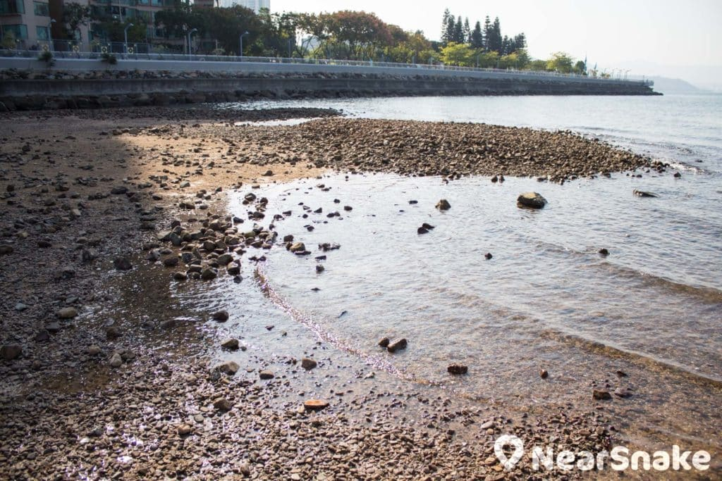 烏溪沙沙灘在這個位置出現第一個心形石。