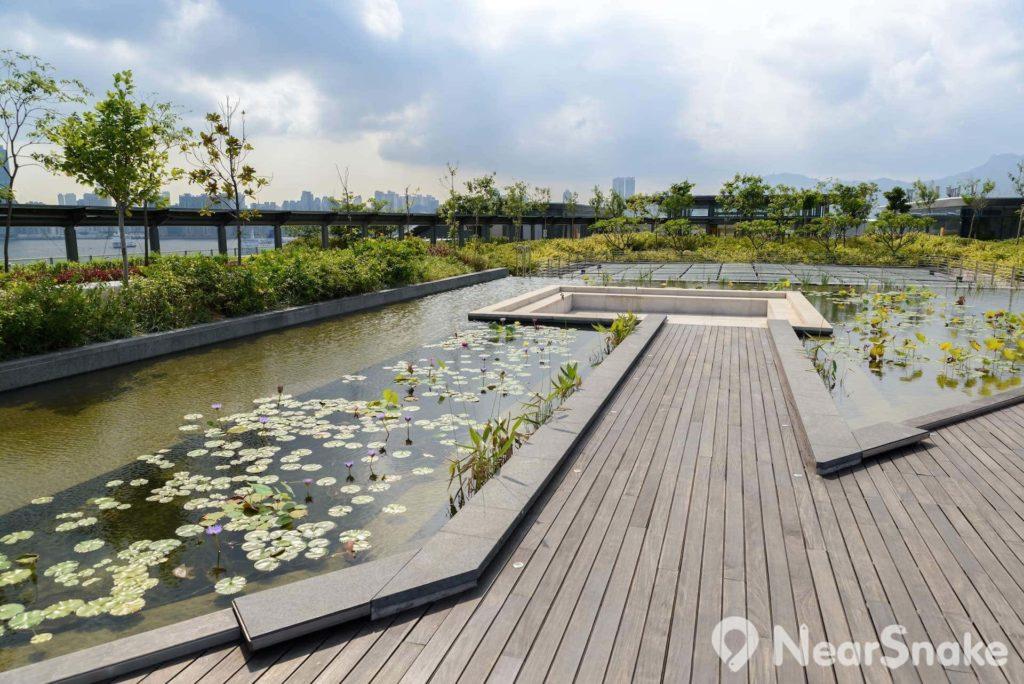 啓德郵輪碼頭公園設有水景花園,環境相當清幽。