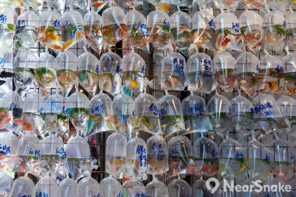 金魚街上最大的特色店舖門前掛滿一袋袋的袋裝魚,魚販會把魚兒放到充滿氧氣的透明膠袋中,並會在袋身寫上價格,明碼實價。