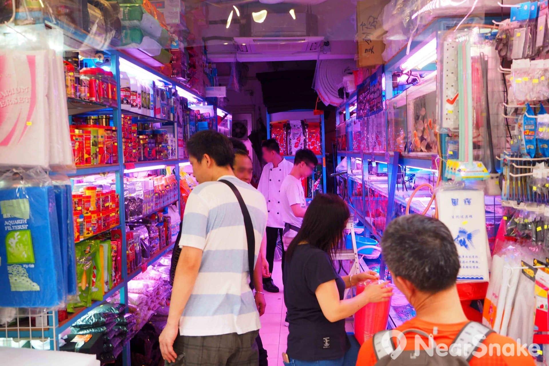 販賣金魚和水族用品的店舖在金魚街上成行成市,吸引不少養魚發燒友四處尋寶。