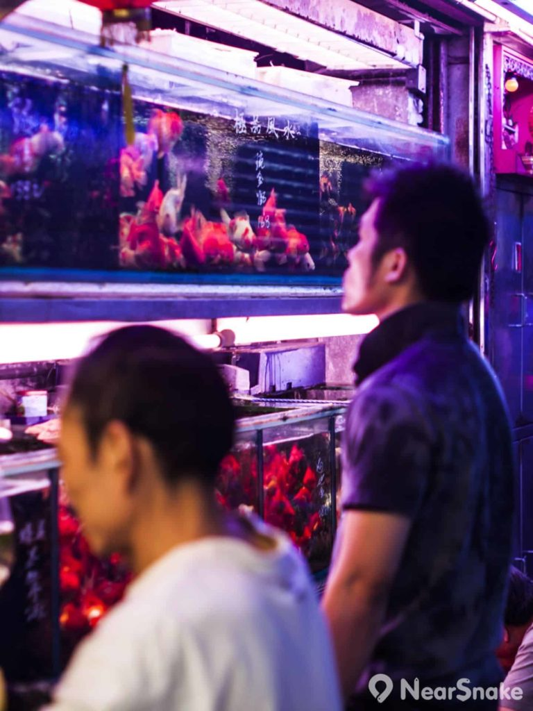 身價高昂的魚會放到一排排的大魚缸中飼養,讓人仿如置身水族館內。