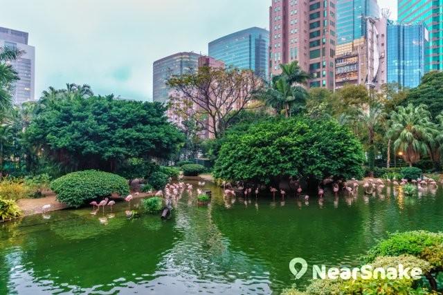 九龍公園 新縮圖