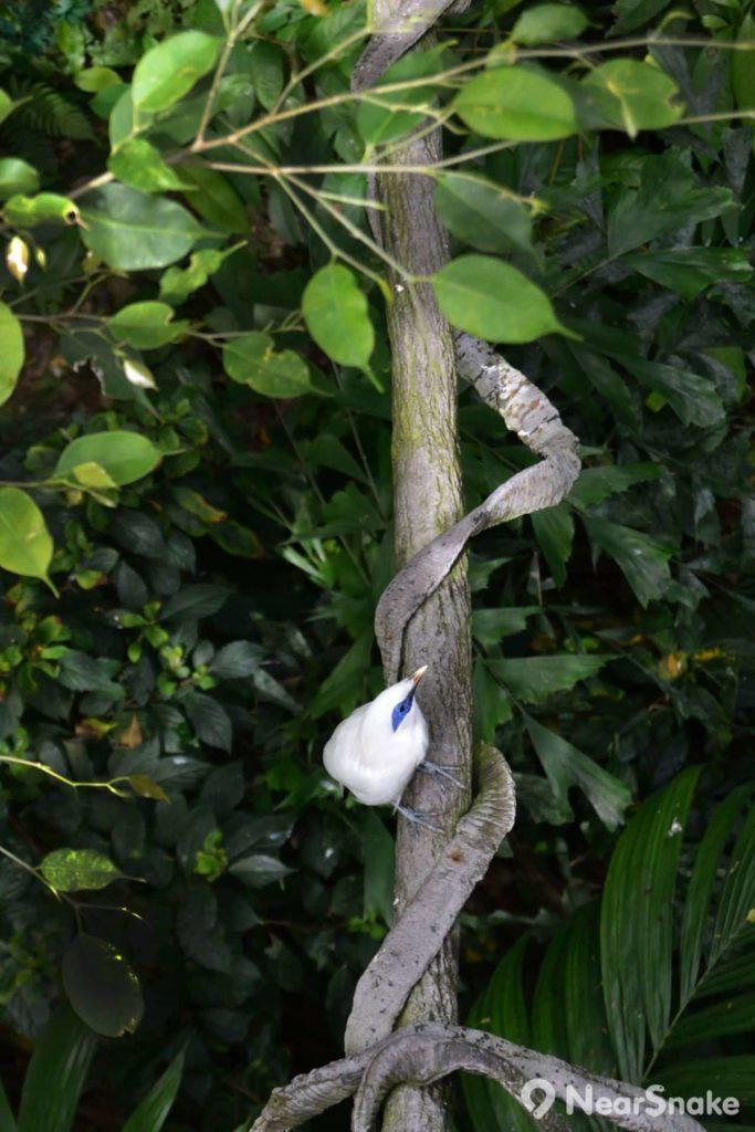 大家遊覽尤德觀鳥園時,只要細心留意一下,便可發現樹木林間有不少雀鳥流連。