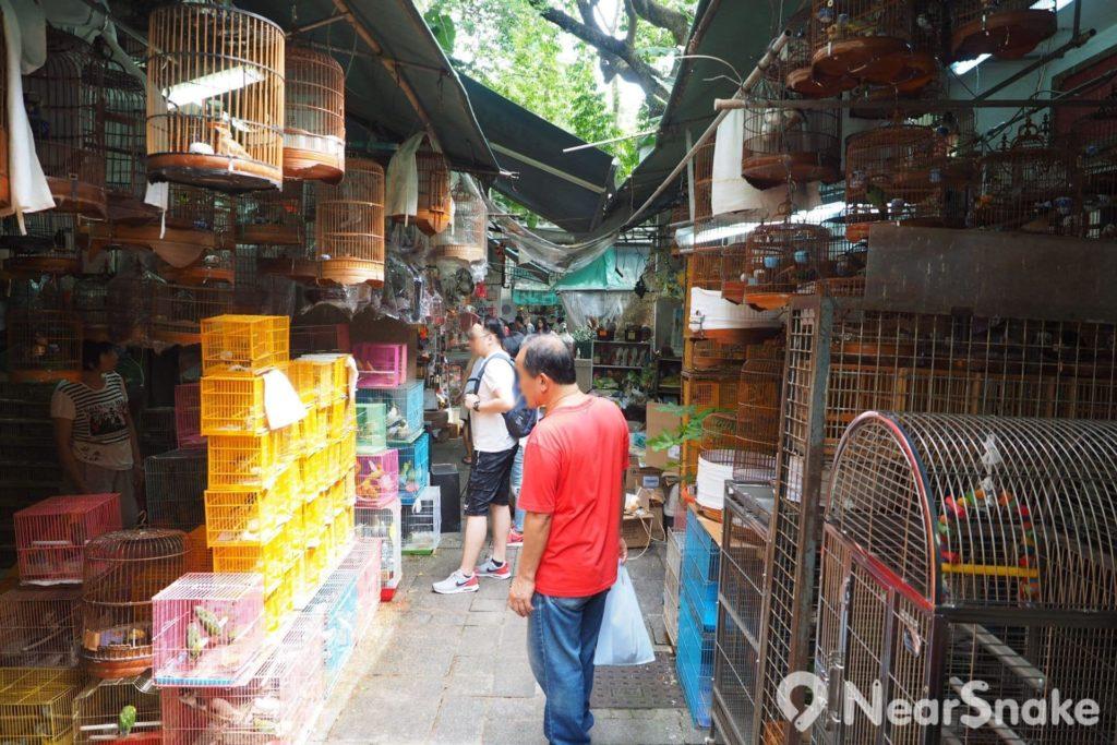 園圃街雀鳥花園販賣區的行人通道雖然較為狹窄,惟卻吸引到不少遊人駐足欣賞各種雀鳥。