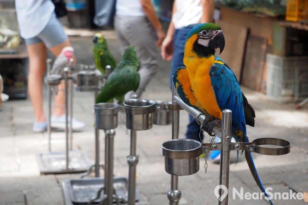 園圃街雀鳥花園: 部分店舖會將生性純良的鸚鵡,放在店外的金屬架上,遊人可與之觸摸與互動,惟謹記注意衛生,接觸雀鳥必須洗手。