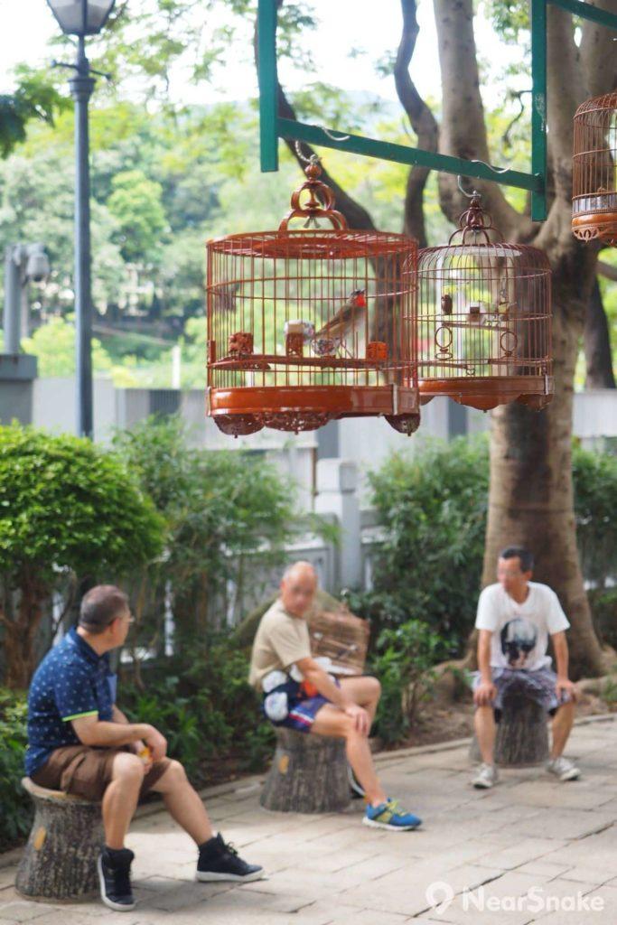 雀鳥花園內設有休憩區,不少「雀友」會經常到來聊天或交流心得。