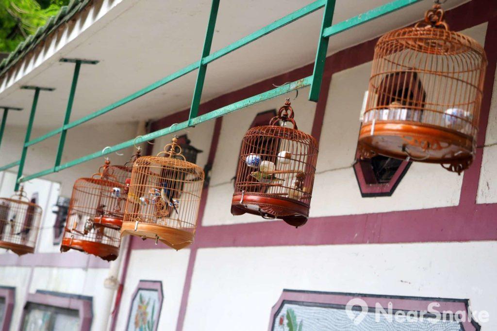 雀鳥花園配置了框架,讓愛雀人士懸掛「曬雀」,以及炫耀他們的寶貝。