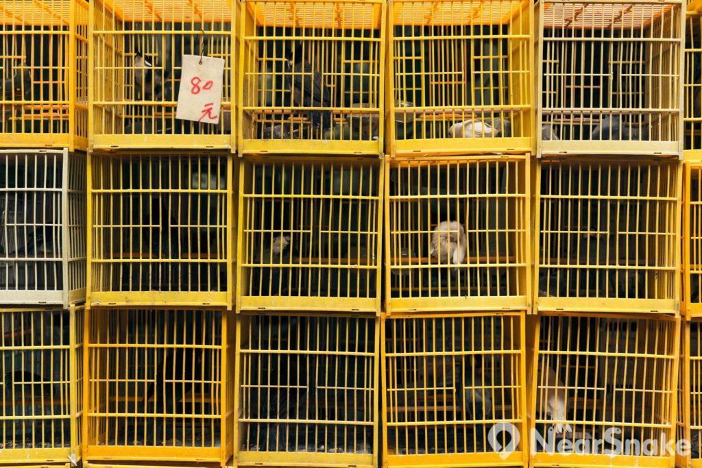 園圃街雀鳥花園: 雀鳥店舖門前堆放了一個又一個鳥籠,有如積木般組裝成一道小牆。
