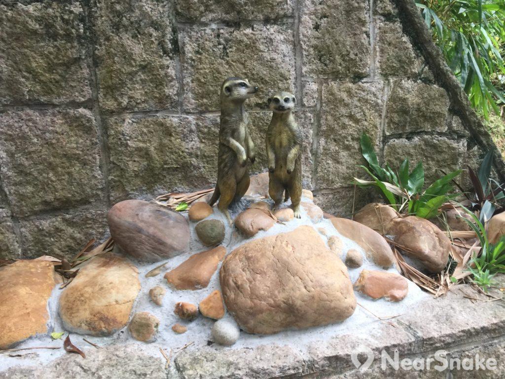 香港動植物公園: 園方深知狐獴的習性,或許怕遊人見不著會失望,故擺放了兩個狐獴公仔在此,讓人望梅止渴。