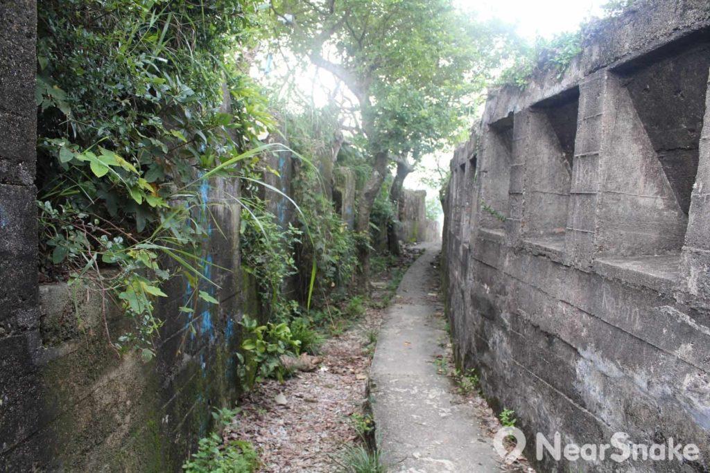 碉堡盡是一道道石壁,叢林在狹縫中茂盛生長。