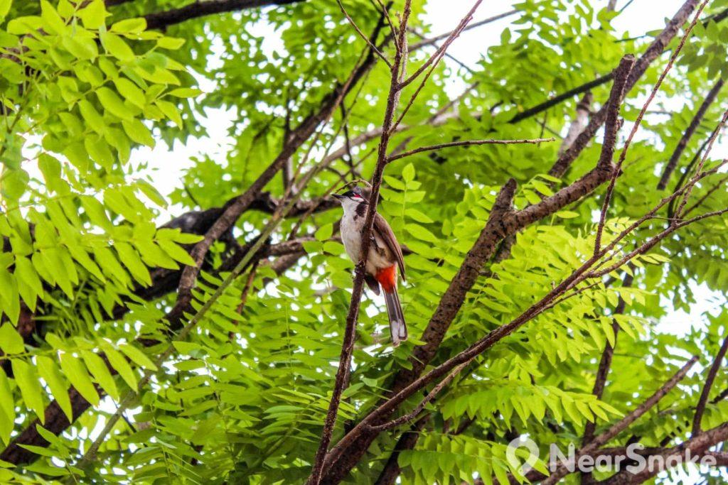 不少雀鳥在南蓮園池找到安身棲息之所。