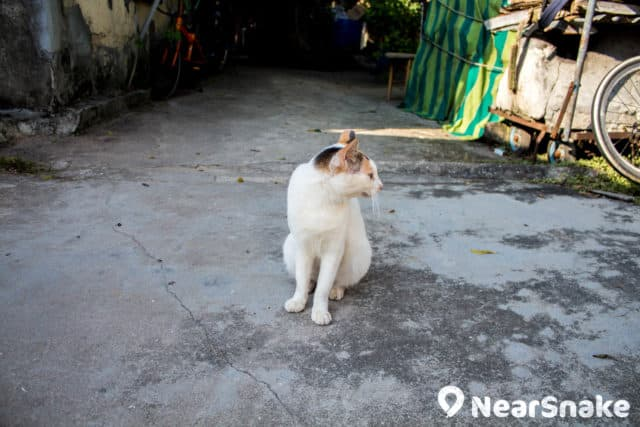 這隻渡頭灣村士多舖頭貓相當黏人,走到那裡都會在你腳邊磨擦,其實是餓了討吃的嗎?