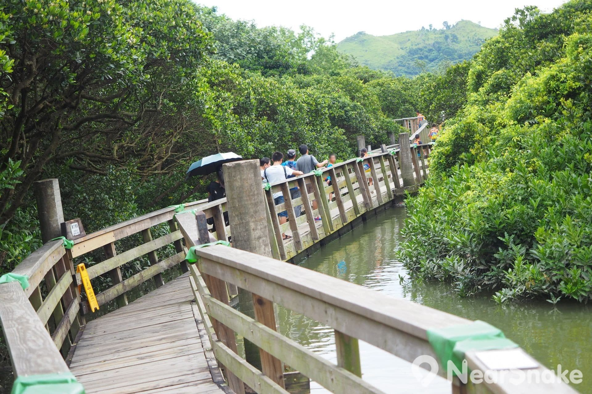 踏上紅樹林浮橋後,大家不僅可感受到左搖右擺的飄浮體驗,更會有融入紅樹林自然環境的感覺。