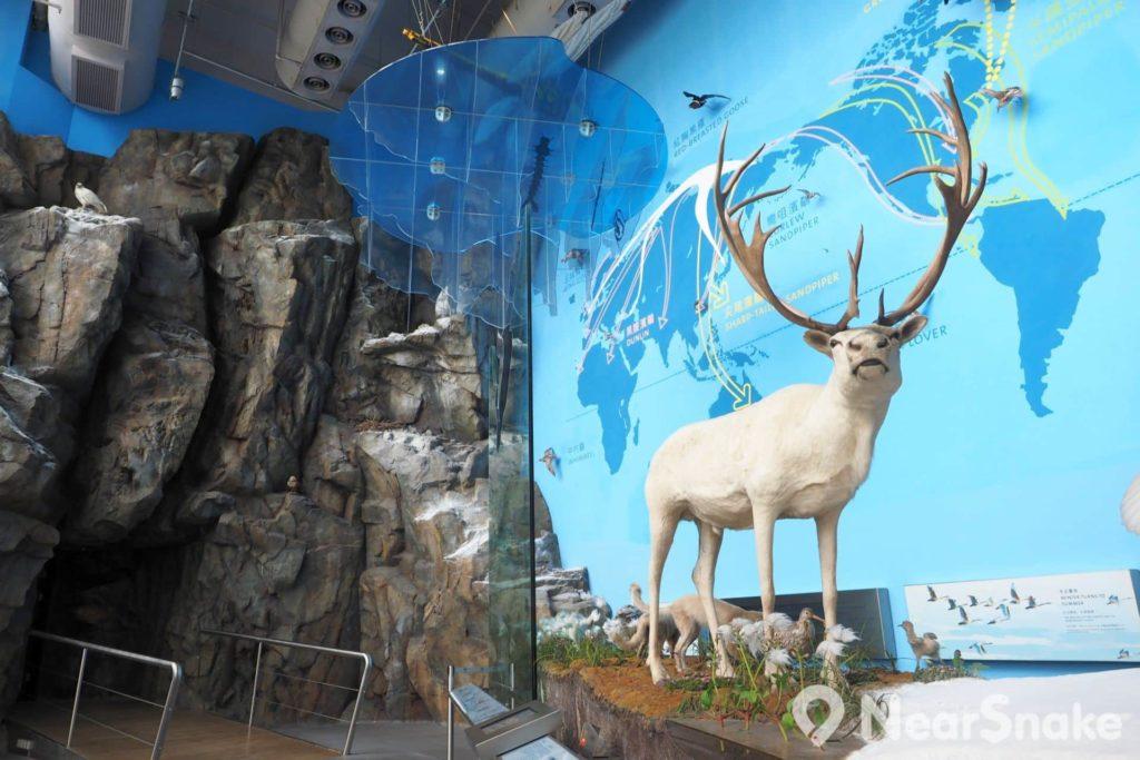 香港濕地公園訪客中心設有五個不同主題展覽廊,大家可在此參觀各種標本和擺設,以及提供互動裝置進行遊戲。