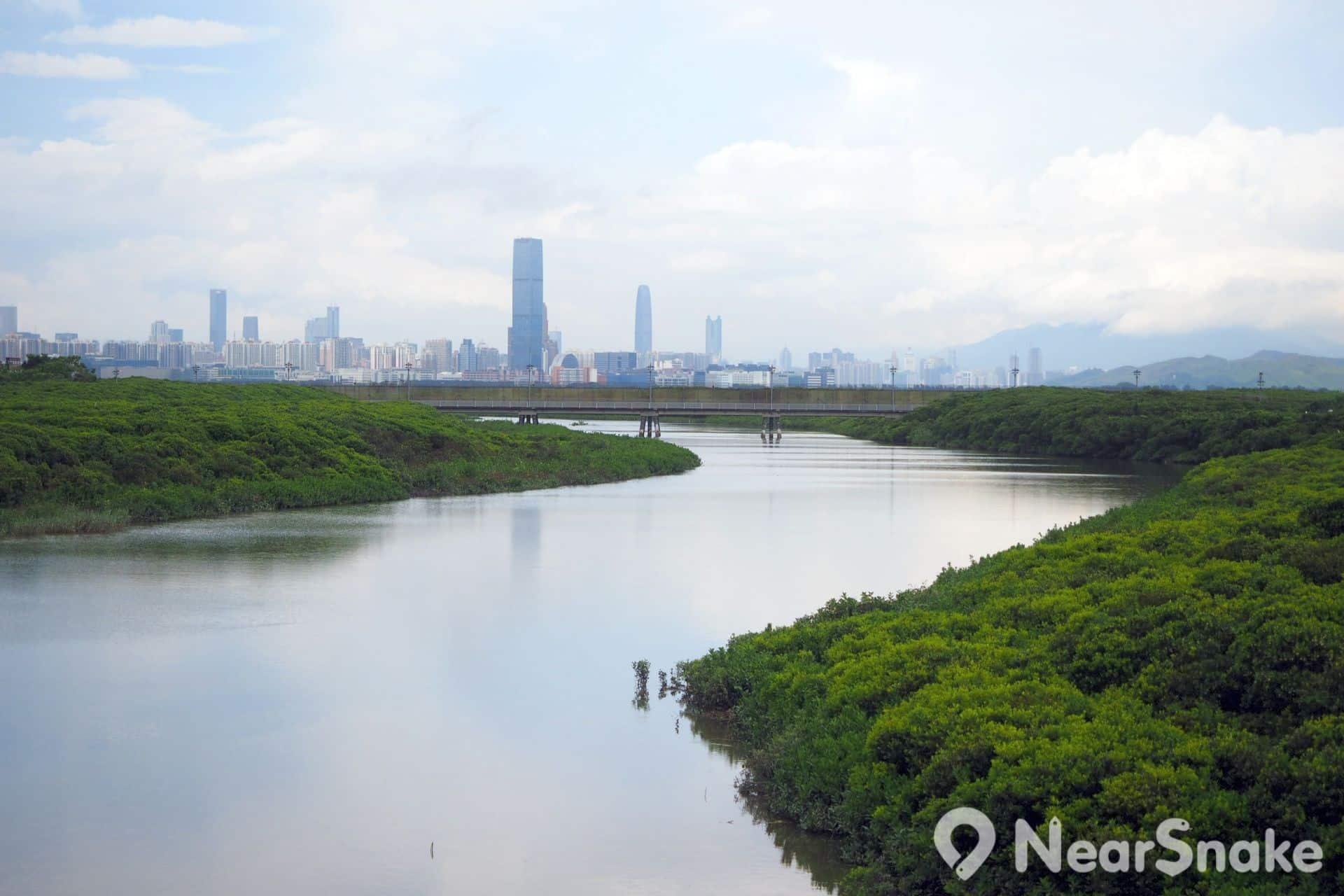 從河畔觀鳥屋向外眺望,可看到前景的濕地,以及後景的深圳高樓大廈。