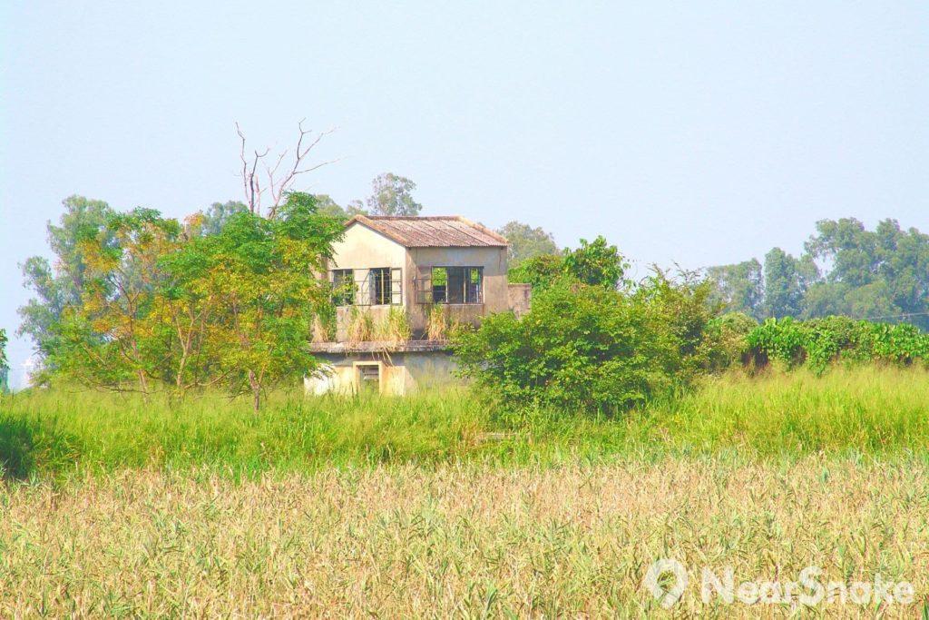 南生圍內這棟雜草叢生的石屋,現時已無人居住,卻成了絕佳的拍攝對象,不少電影和電視劇均曾在此取景。
