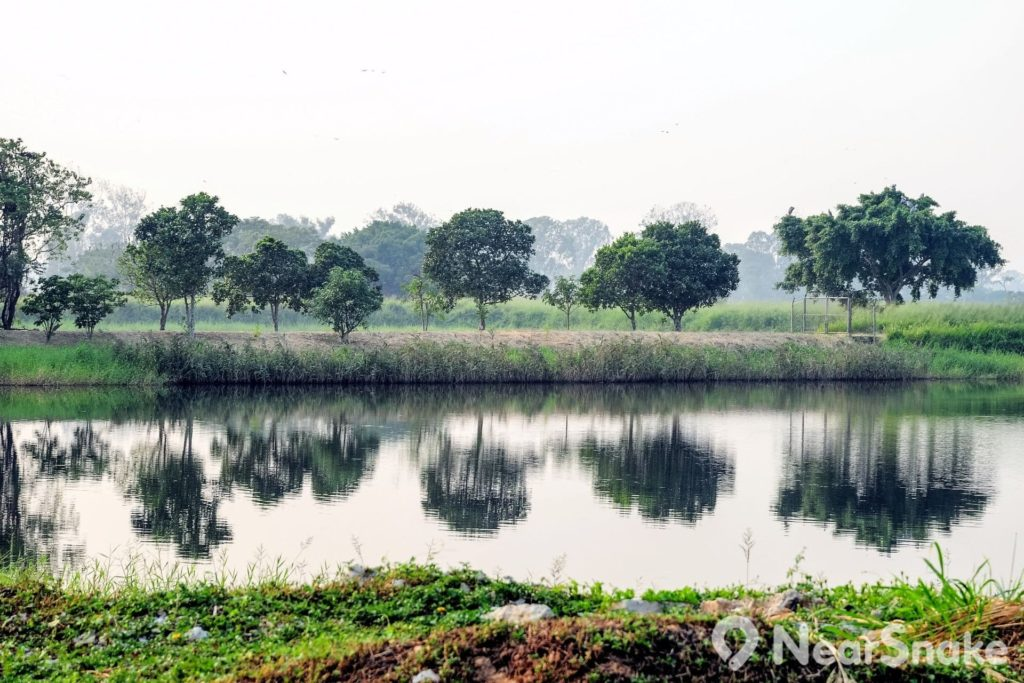 元朗南生圍內的水塘為動植物帶來生機。