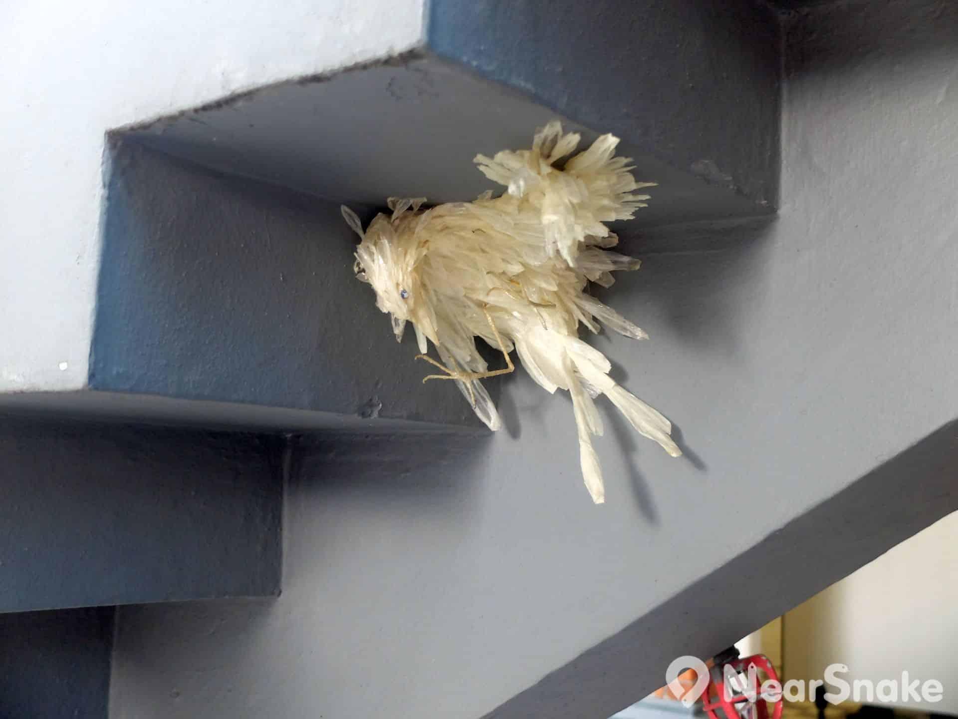 油街實現建築物的樓梯底,竟然藏有一隻白色烏鴉!若果大家拿塊濾鏡觀看,便會變回黑色。它的名字是「快樂王子的朋友 - 烏鴉」。