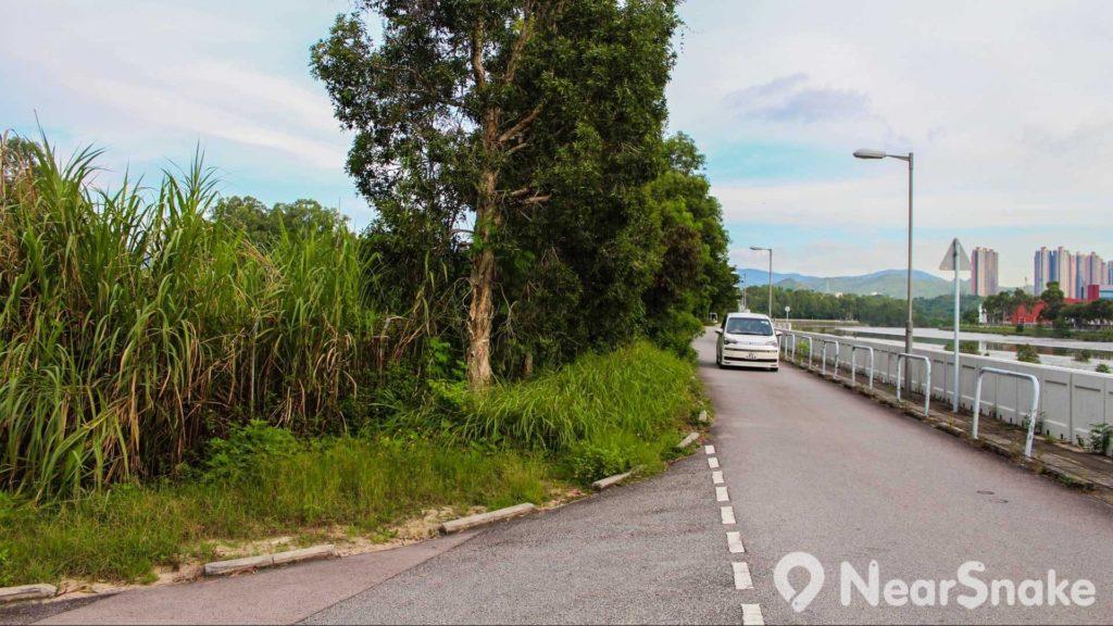 南生圍路是一條單程路,駕車人士要倍加小心。