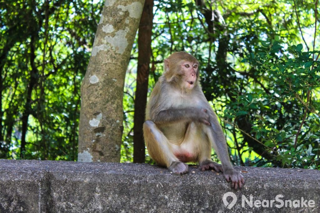猴子悠然自得的在踱步,或是搔搔癢,相當逍遙。