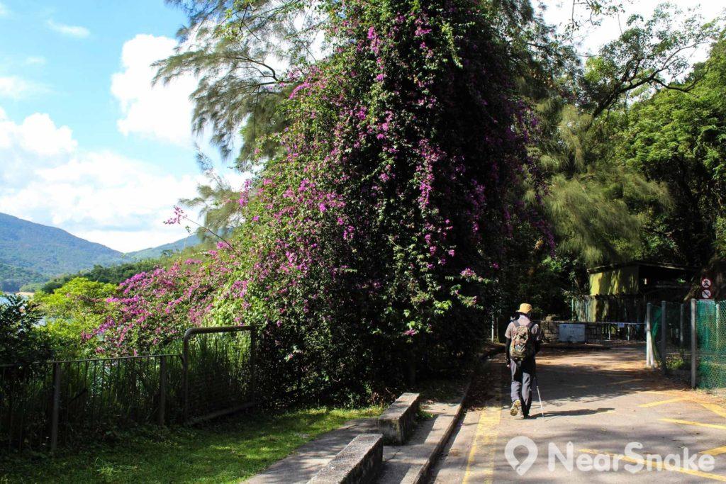 一棵夾雜著鮮花生長的大樹,也是另一易認的路標。