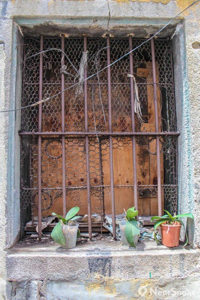 架起木板鐵欄的窗戶,有幾棵充滿生機的小盆栽。