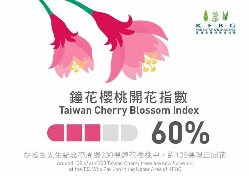 嘉道理農場自 2016 年起,在其Facebook 專頁上發布鐘花櫻桃及梅花開花指數,讓民眾可及時進場賞櫻。