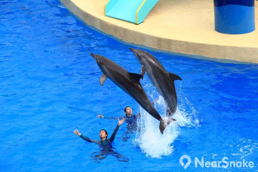 海豚表演是園內最受歡迎的表演之一。
