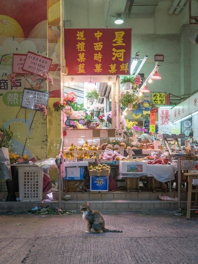 荷蘭攝影師 Marcel Heijnen 先後推出「港貓三部曲」攝影集——《香港舖頭貓(Hong Kong Shop Cats)》、《香港街巿貓(Hong Kong Market Cats)》及《香港後巷貓(Hong Kong Alley Cats)》,深受貓迷歡迎。