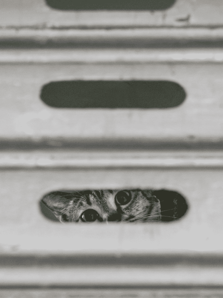 Marcel Heijnen 的《香港街巿貓》攝影展將於西營盤餘樂里一號舉行。