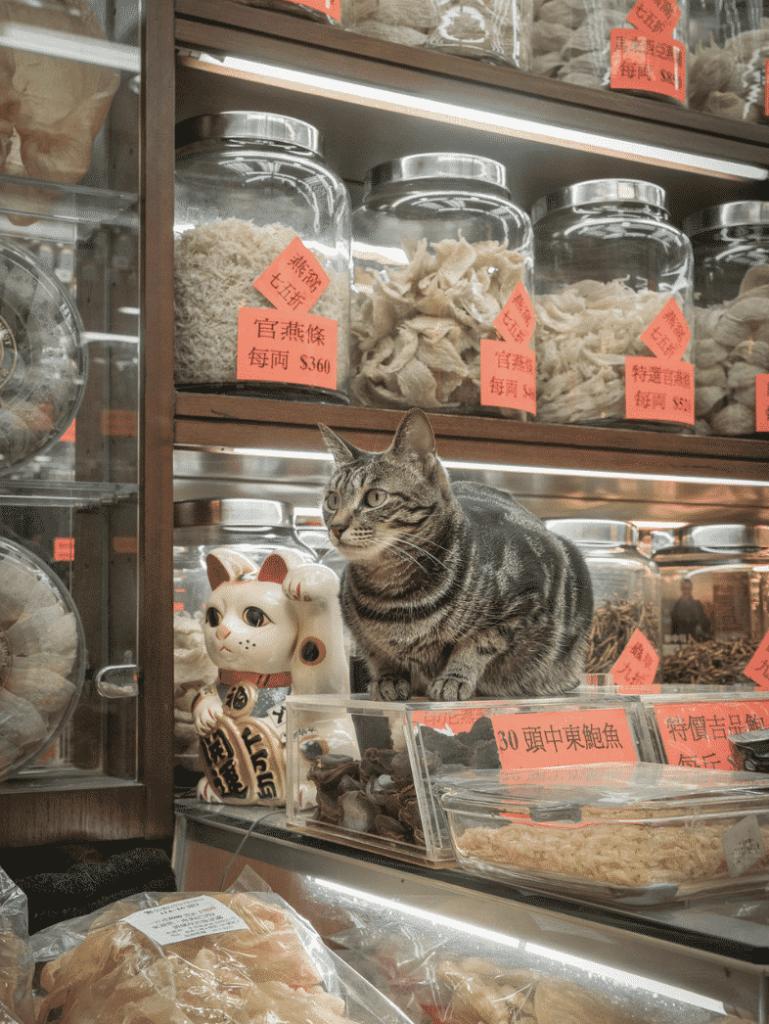 香港有很多傳統舊舖例如海味店都養著貓,圖中的貓主子與招財貓靠在一起,拼成一幅有趣的構圖。
