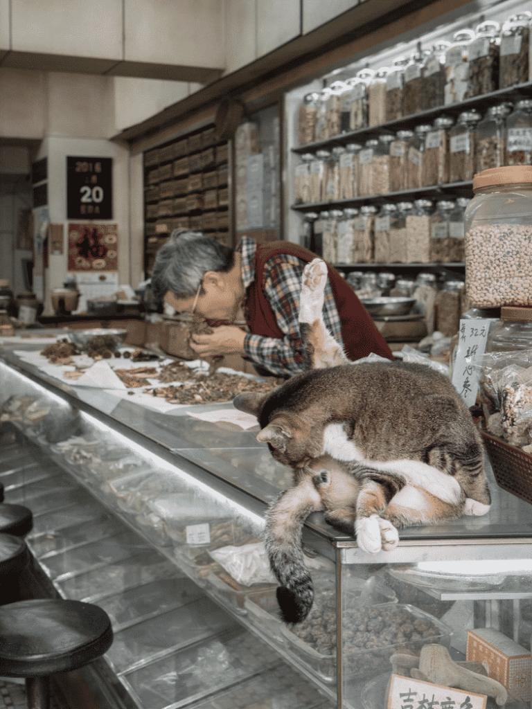 現在舖頭貓每天的任務就是吃和睡,還有擔當店主的友伴,店主閒時會跟牠們玩耍。
