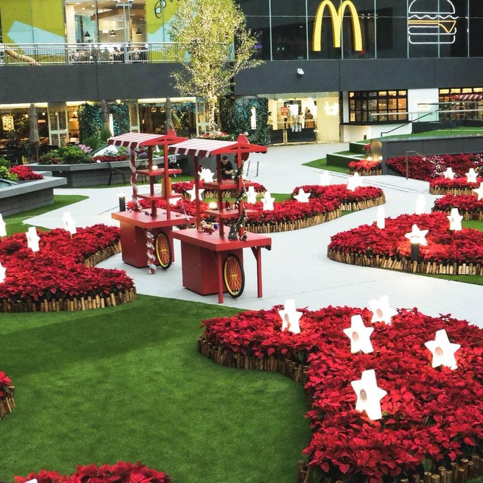 40,000 呎露天廣場上擺放了許多聖誕花,中間更有一些星形燈,晚上時份格外耀眼。