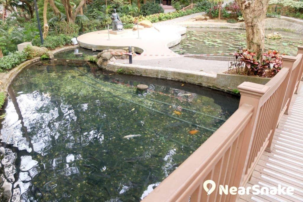 蒙國平花園另一端的小橋下是一個小魚池,看著魚兒暢游其中,叫人心曠神怡。