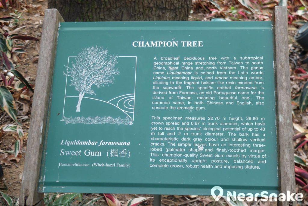 蒙國平花園內設有「楓香」樹的介紹展板,但為何內容只有英文?