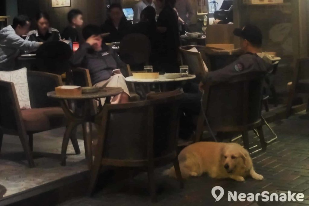 在蘇豪東閒逛,真的很容易便看到「帶狗雄郎」喔!