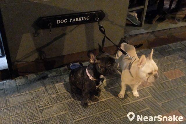 蘇豪東有部分食肆店外設有「Dog Parking」,夠貼心吧!