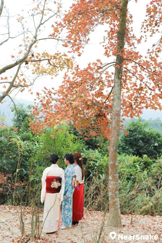 和服少女與紅葉映襯,令人感覺仿佛置身日本。後期製作時,加強照片亮度和色彩飽和度,並調整至偏藍和偏綠,會帶來日系照片風格。