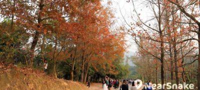 香港紅葉拍攝季節!5 個新手必學的紅葉攝影技巧總整理