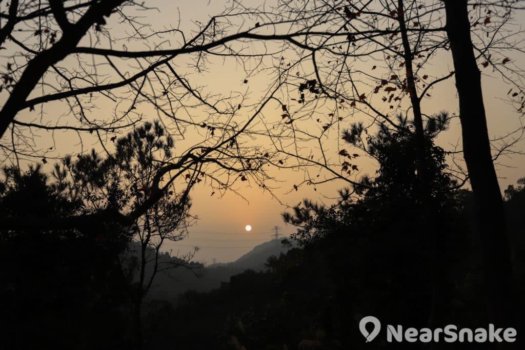 夕陽時分凋零的枝椏剪影,帶來一種落寞的秋冬意境。