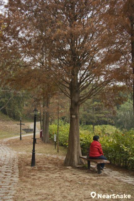 大家在哲徑走得倦了,可坐在未圓湖畔的木椅上,眺望紅葉湖景。