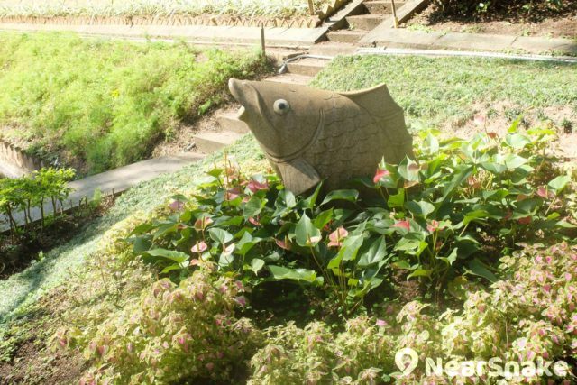 說花墟公園沒有花也是太跨張,總會找到一些,還會有伴襯的石雕。