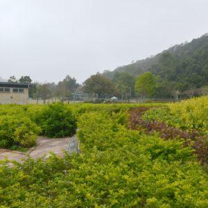 佐敦谷公園大草地旁設有迷宮花園,不少小朋友最愛在此玩捉迷藏,至於內裡栽種什麼植物,不重要啦!