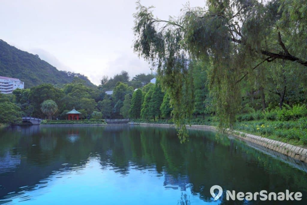 未圓湖畔栽植了不少落羽杉,每年秋冬季節葉子便會變紅,因而被推許為香港的熱門紅葉景點。