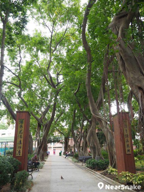 原來荃灣沙咀道遊樂場內藏一個小公園,入口一副對聯迎接遊人,公園內種有不少蔥鬱大樹,環境優美。