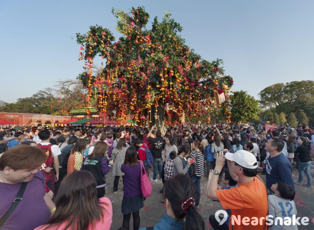 大批遊客每逢新年湧去林村,向許願樹拋寶牒許願。