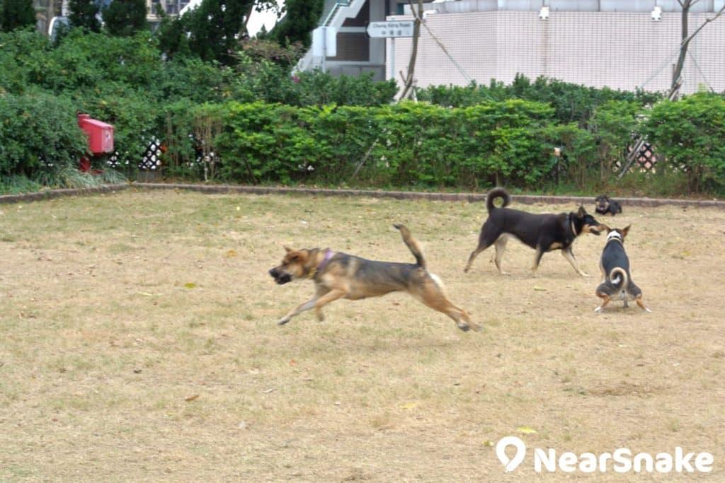 中西區海濱長廊-上環段寵物角可是為狗狗而設,狗狗們可以自由奔跑玩耍。