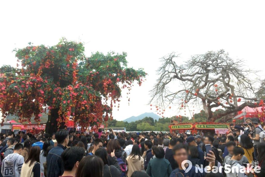 林村鄉公所設置一棵 25 呎高的玻璃鋼樹幹仿真細葉榕,以代替原本的許願樹供人拋寶牒許願。