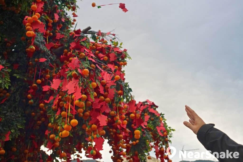 相傳林村許願樹寶碟拋得愈高,願望就會愈容易實現。