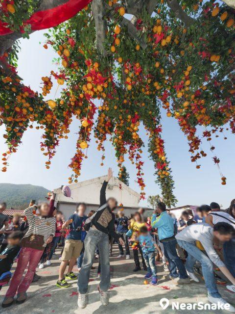 有人會躍起拋擲寶碟,務求將寶碟掛在林村許願樹之上。